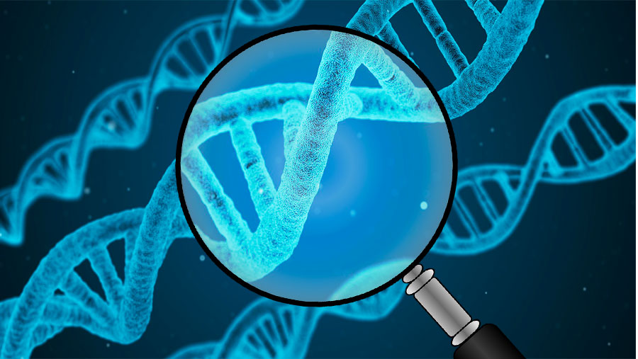 Epigenetic regulation of the genome