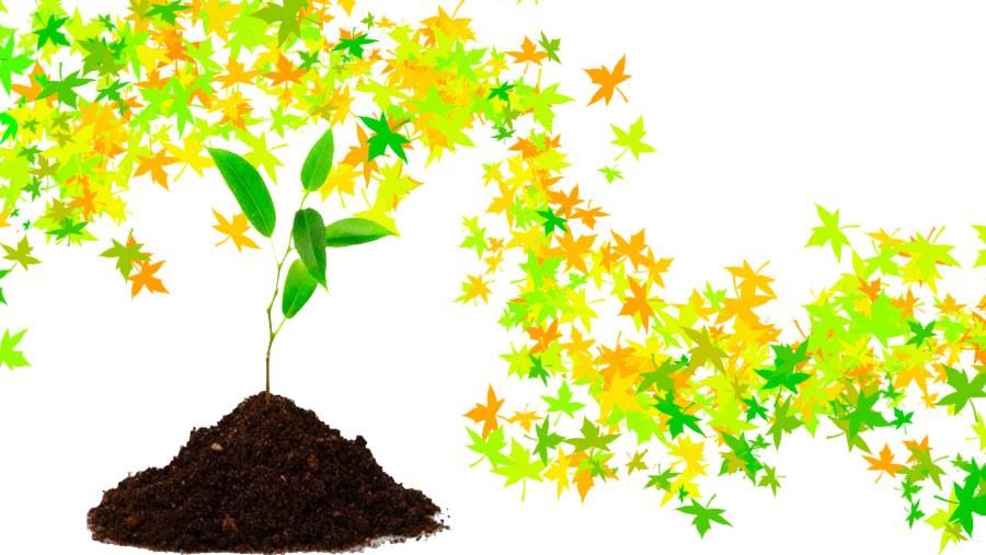 Etnobotánica: el papel de las plantas en nuestra vida